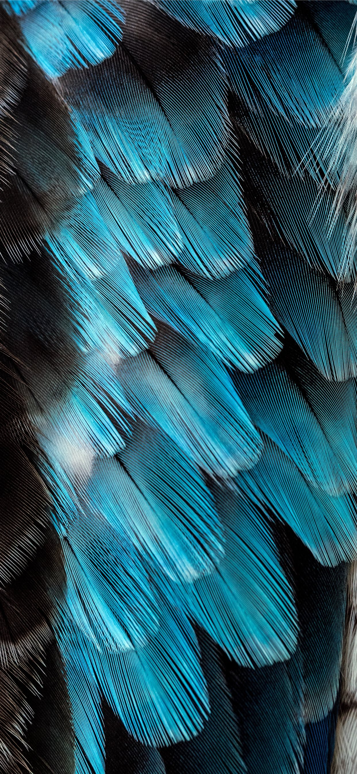 Black And Blue Feather Iphone 11 Wallpapers Free Download