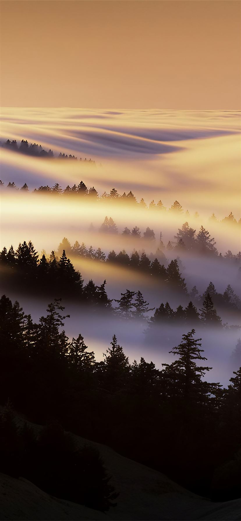 marin county mist morning 4k iPhone 11 wallpaper