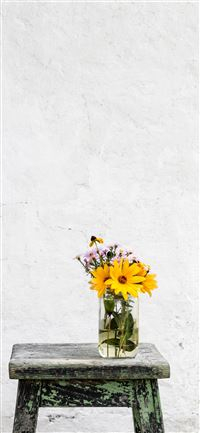 sunflower with clear glass vase on gray table iPhone 11 wallpaper