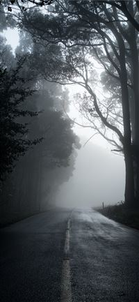 gray road in between trees in grayscale photograph... iPhone 11 wallpaper