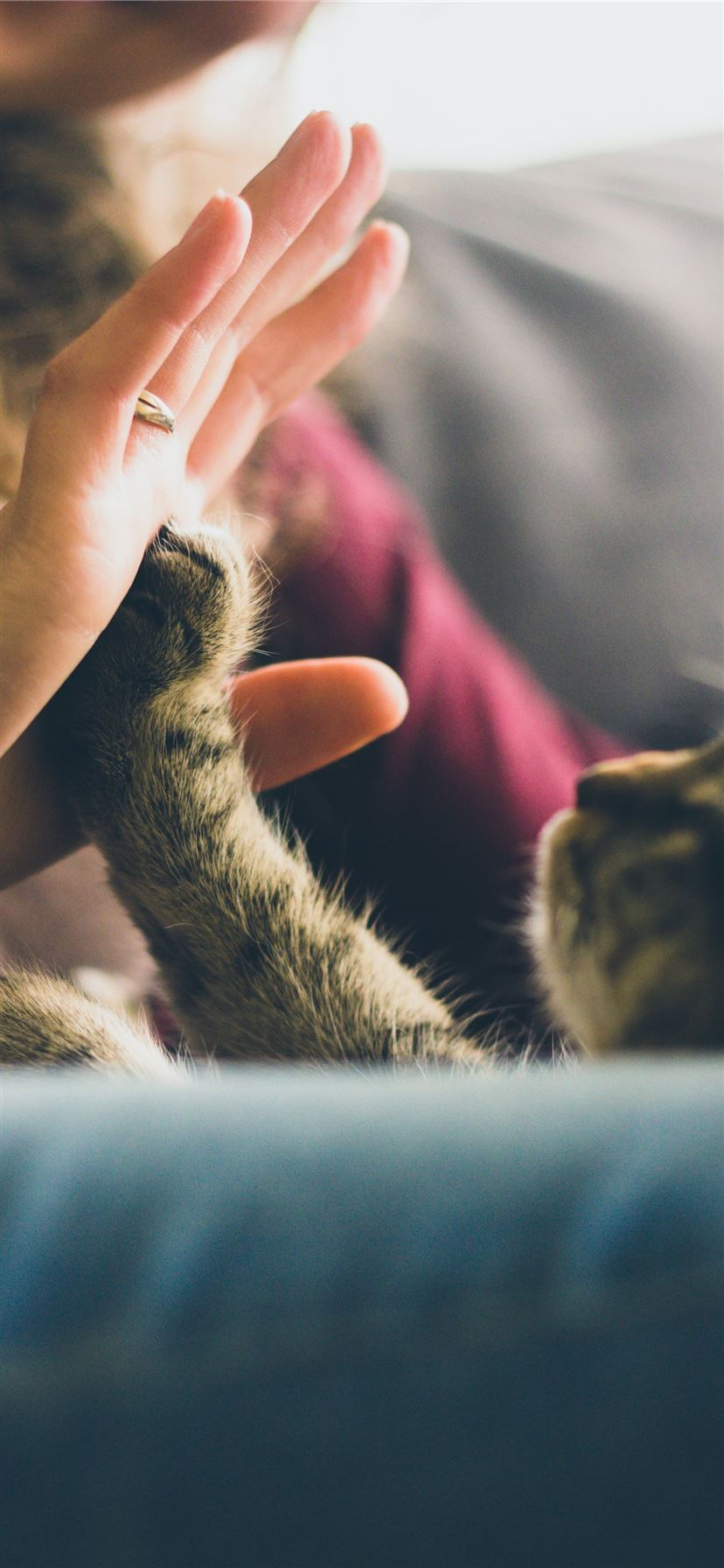 tabby cat touching person's palm iPhone 11 wallpaper
