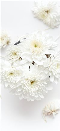 white petaled flower on white background iPhone 11 wallpaper