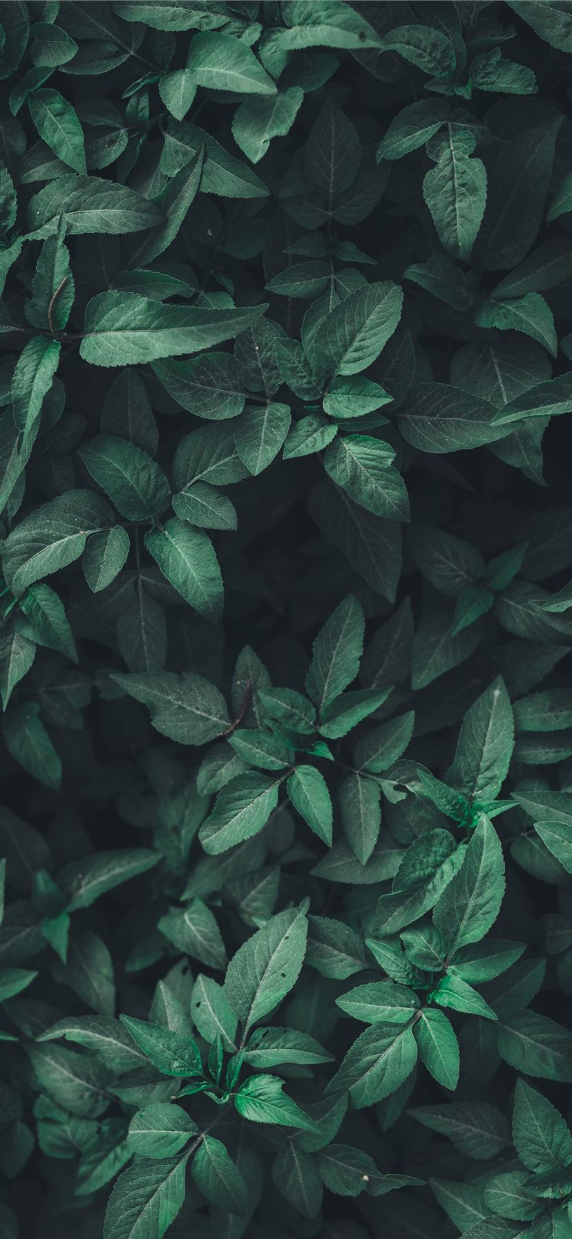 Best Green Iphone 11 Hd Wallpapers Ilikewallpaper