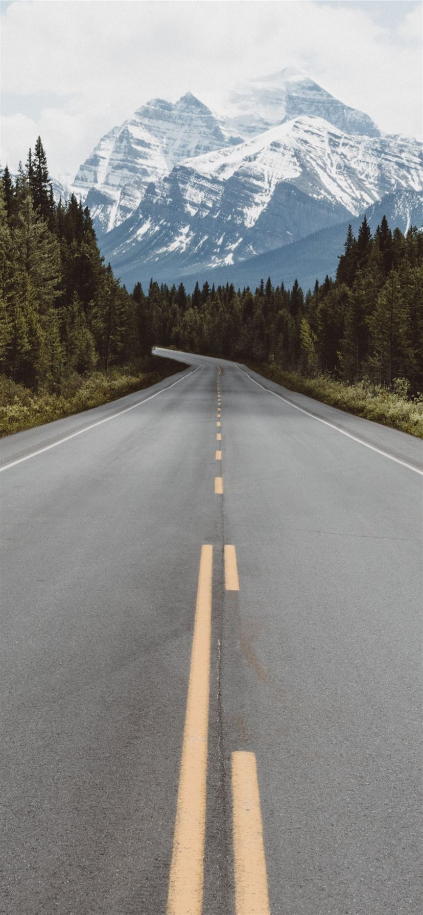 gray pavement road surrounded by trees taken at da... iPhone 11 wallpaper