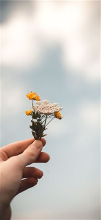 person holding flowers iPhone 11 wallpaper