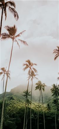 coconut trees during day iPhone 11 wallpaper