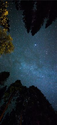 bottom view shot of trees under starry sky iPhone 11 wallpaper