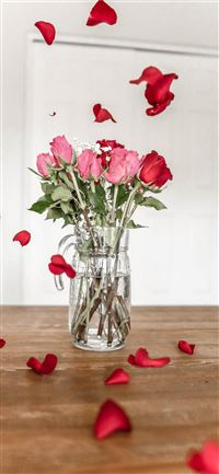 pink and red roses on clear glass vase iPhone 11 wallpaper