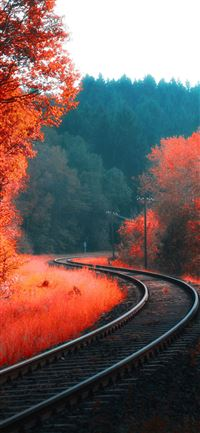railway autumn forest iPhone 11 wallpaper