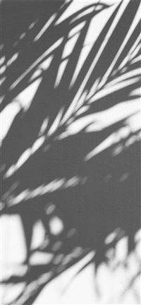 PALM TREE SHADOW iPhone 11 wallpaper