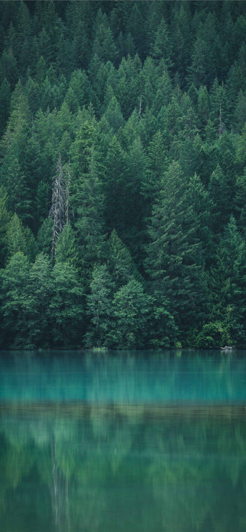 Best Green Iphone 11 Wallpapers Hd Ilikewallpaper
