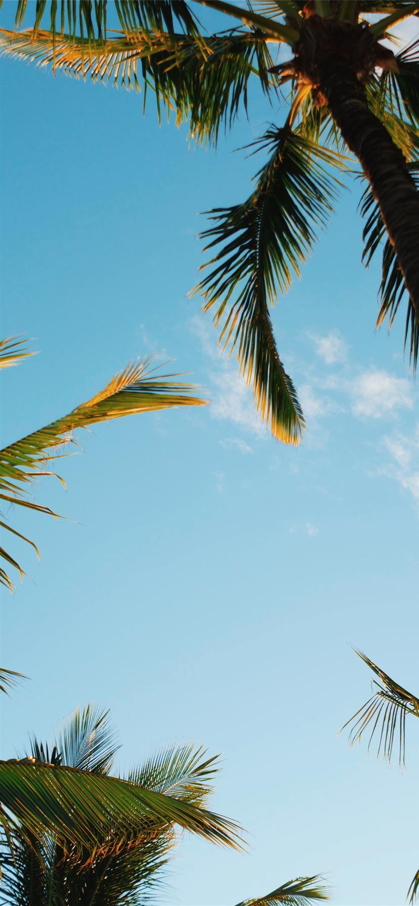 Palm Tree Iphone 11 Hd Wallpapers Ilikewallpaper