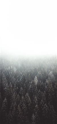 Lost in the woods iPhone 11 wallpaper