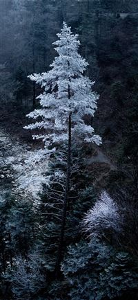 Snowy tree in Bavaria iPhone 11 wallpaper