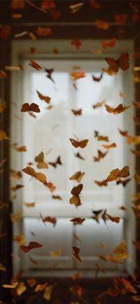 Best Butterfly Iphone 11 Wallpapers Hd Ilikewallpaper