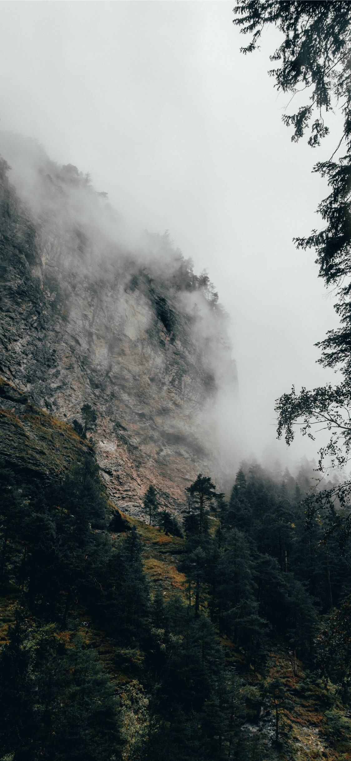 Fog Covered Autumn Forest Iphone 11 Wallpapers Free Download