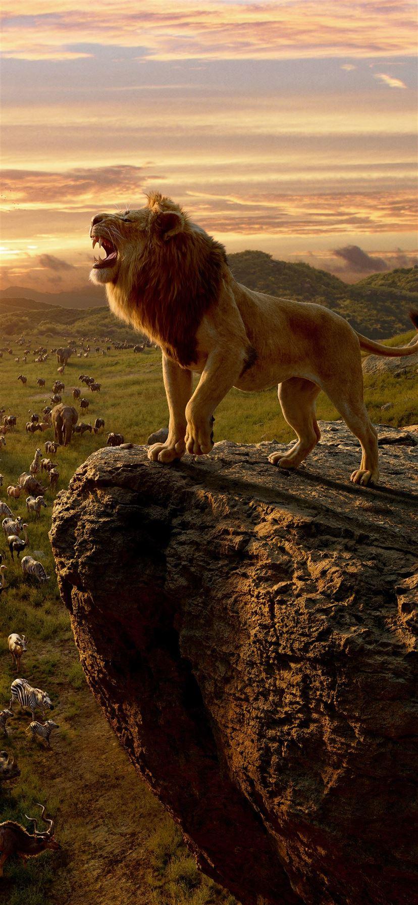 Best Lion Iphone 11 Wallpapers Hd Ilikewallpaper