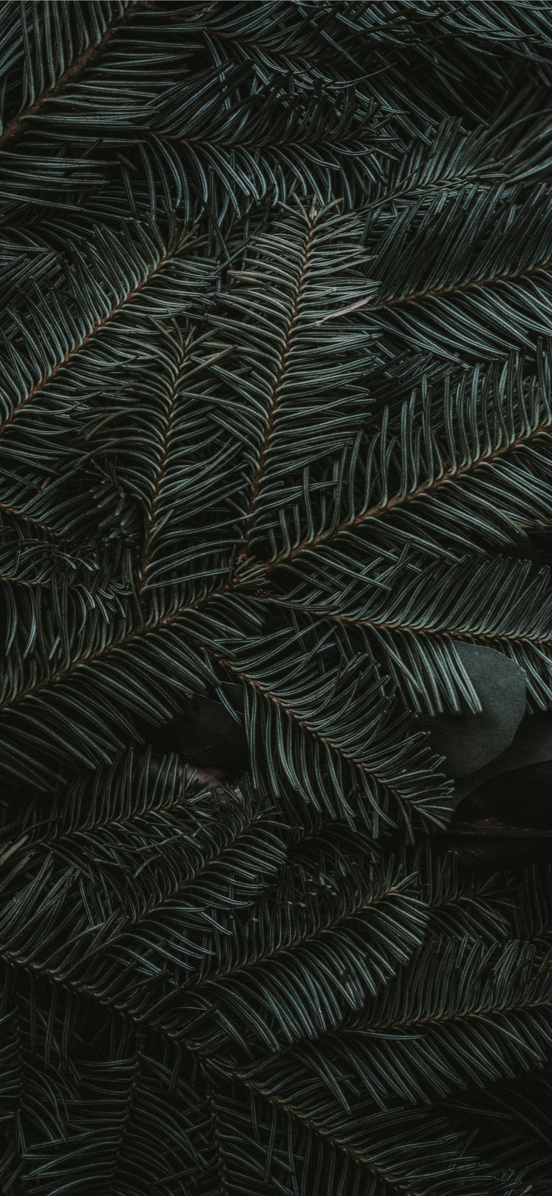 Green Pine Tree Leaves Iphone 11 Wallpapers Free Download