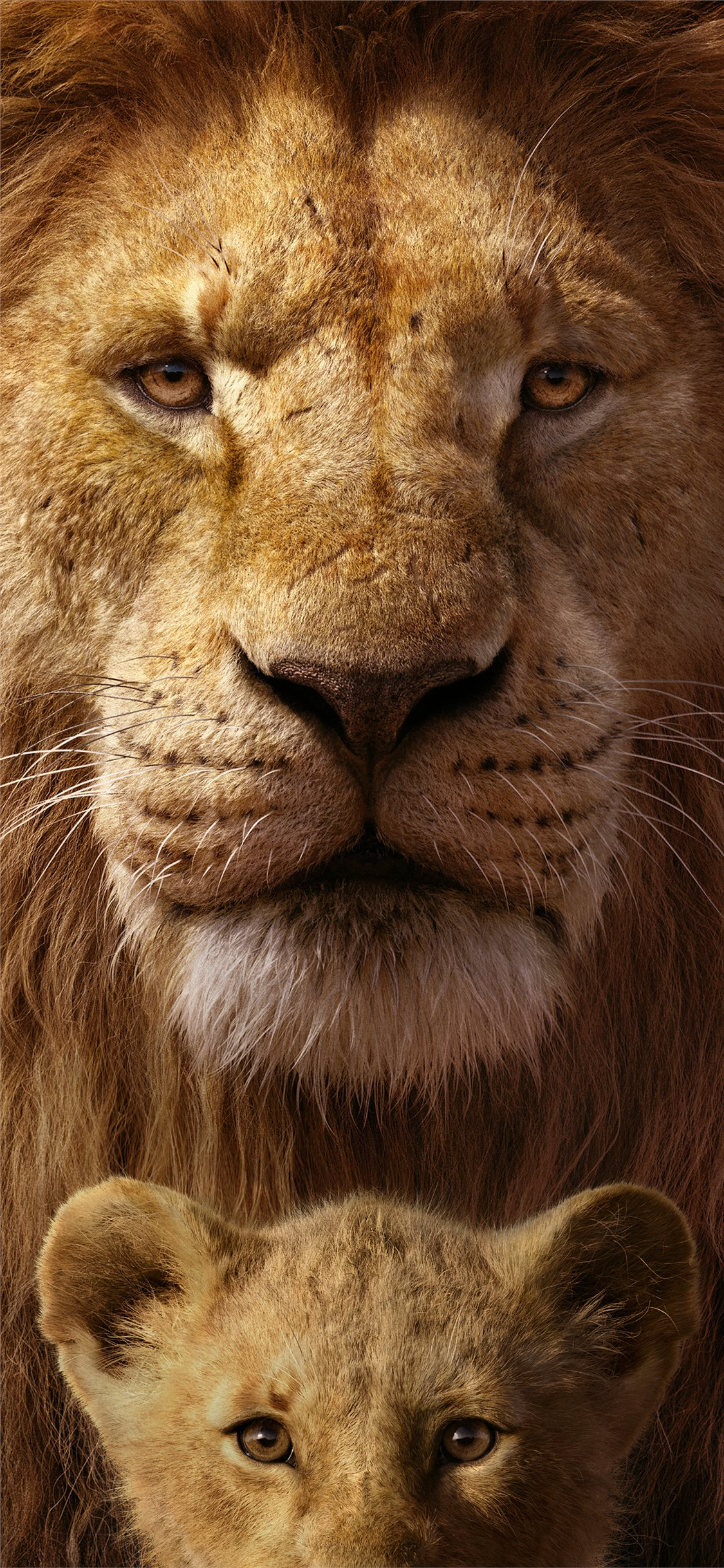 Best Lion Iphone 11 Wallpapers Hd Ilikewallpaper