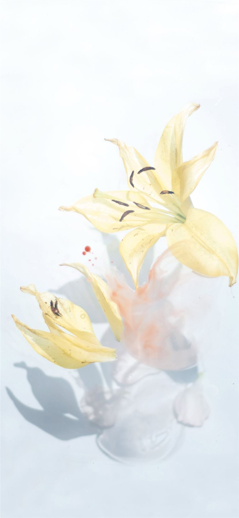 Best White Iphone 11 Wallpapers Hd Ilikewallpaper