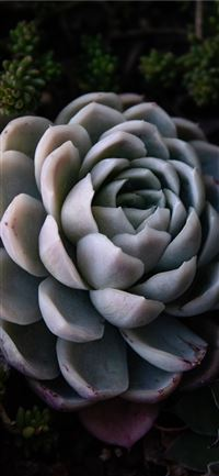 green succulent iPhone 11 wallpaper