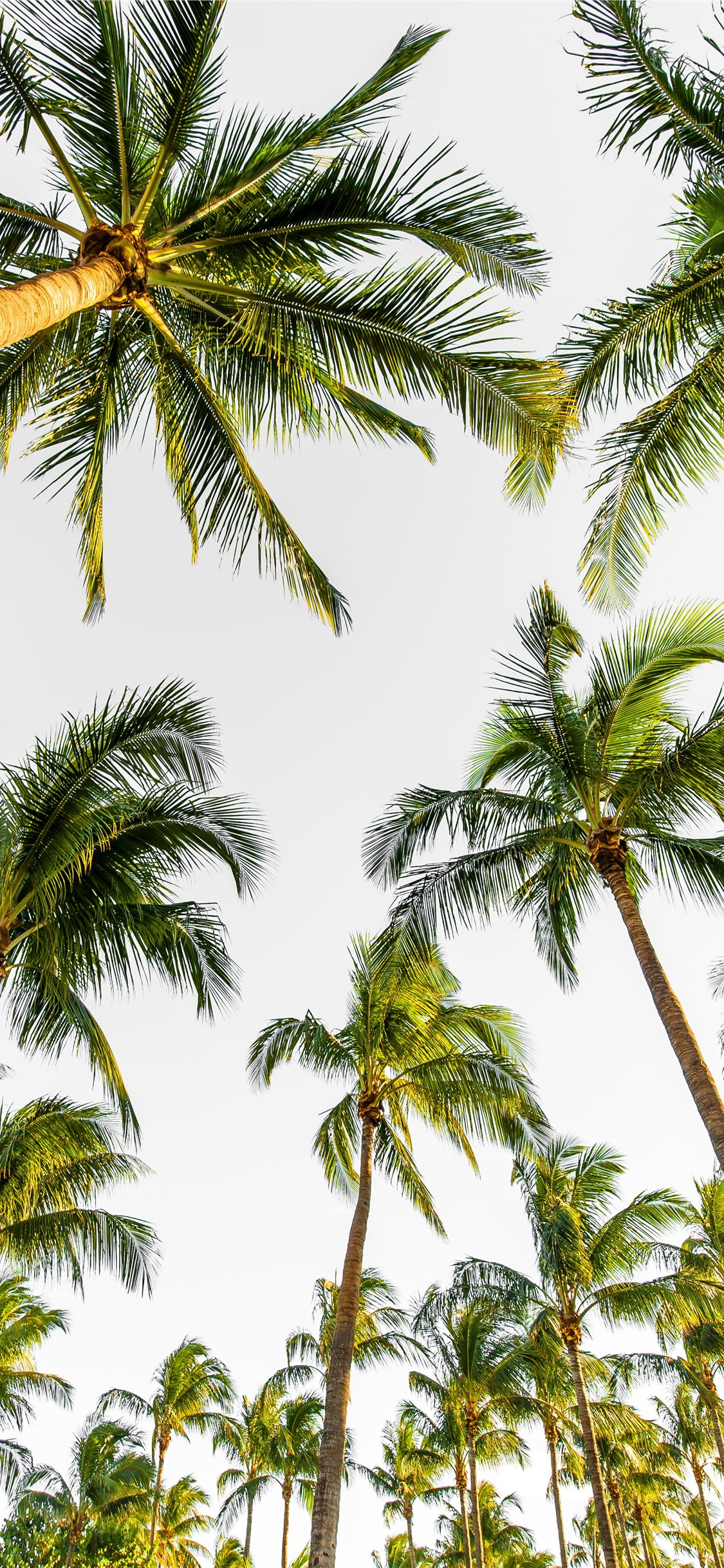Best Palm Tree Iphone 11 Wallpapers Hd Ilikewallpaper
