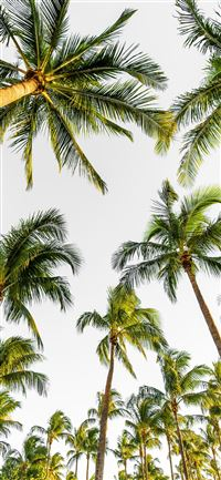 Best palm tree iPhone 11 Wallpapers HD