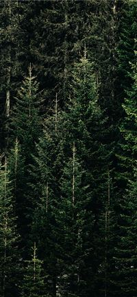 green forest with pine trees iPhone 11 wallpaper