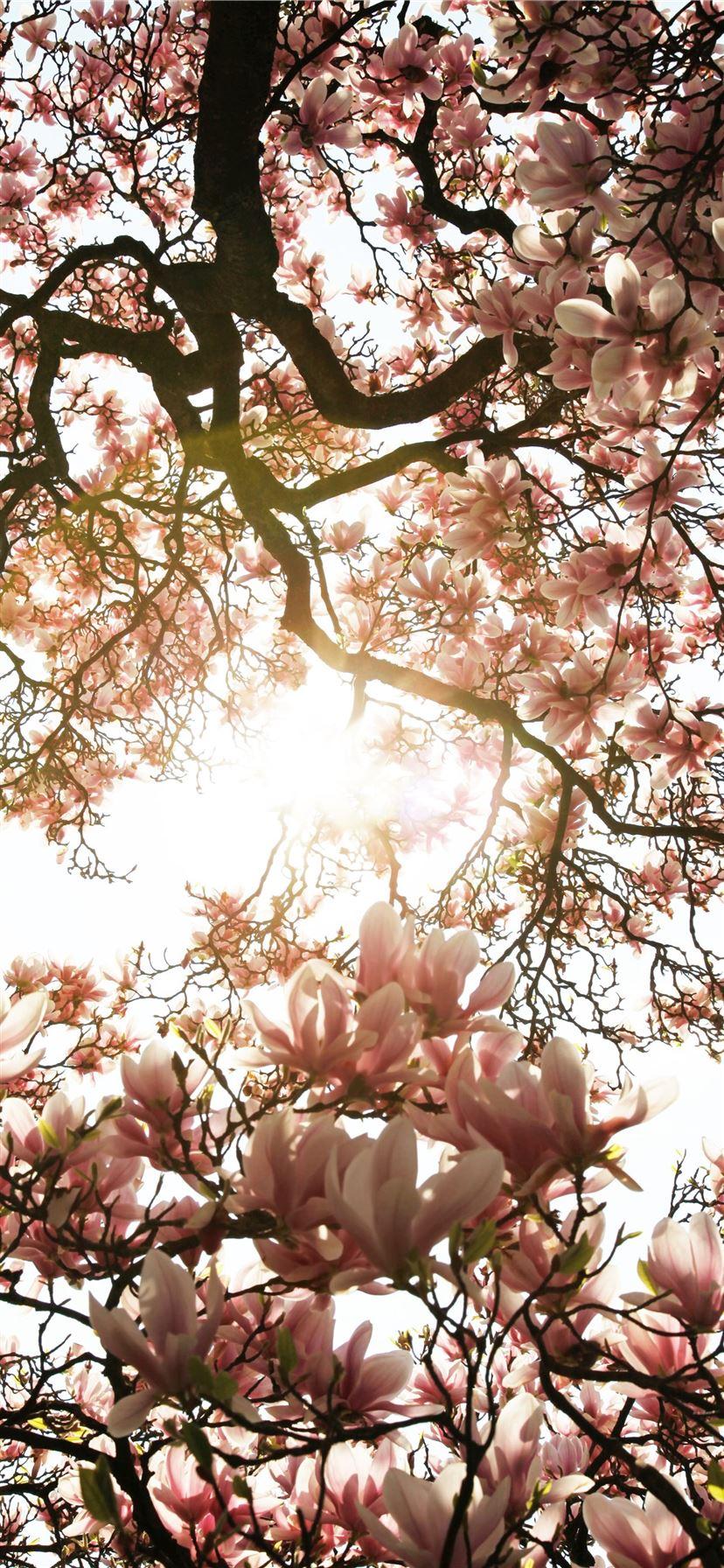 Best Pink Iphone 11 Wallpapers Hd Ilikewallpaper