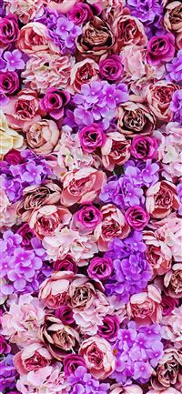 pink and purple petaled flower iPhone 11 wallpaper