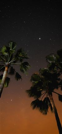 three coconut trees during nighttime iPhone 11 wallpaper