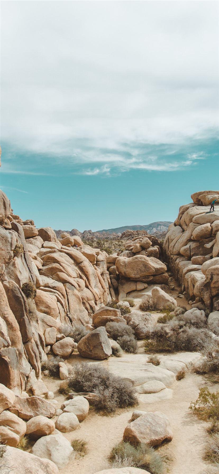 Best Joshua Tree National Park Iphone 11 Wallpapers Hd 2020 Ilikewallpaper
