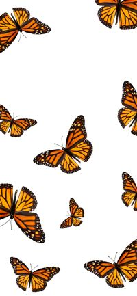 Aesthetic Butterfly Top Free Aesthetic Butterfly Iphone 11 Wallpapers Free Download