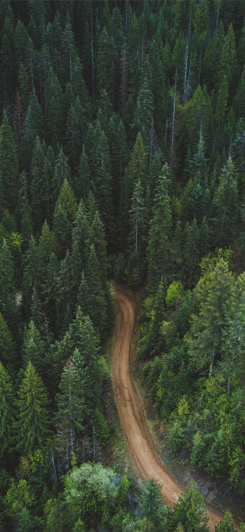 Best Forest Iphone 11 Wallpapers Hd Ilikewallpaper