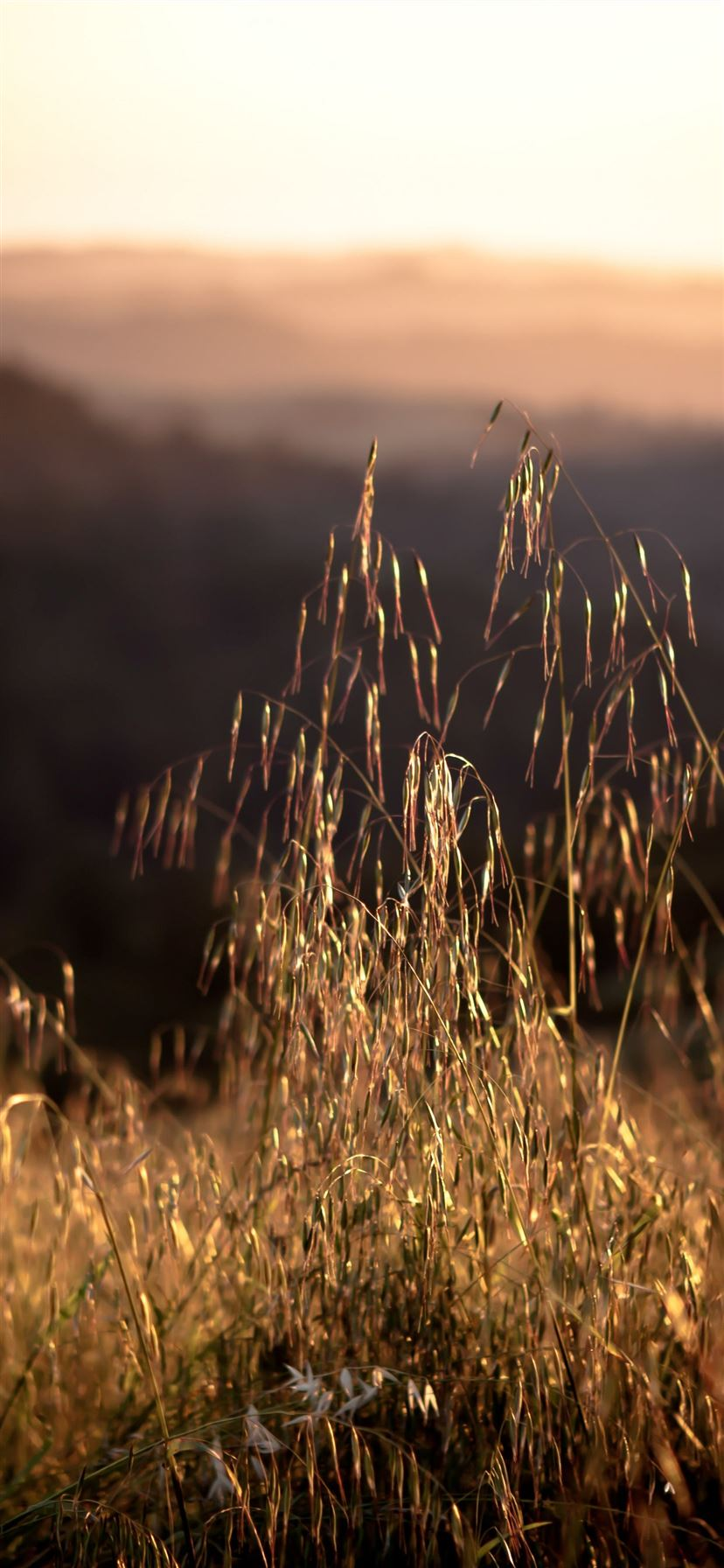 California 4k Hd 8k Field Sunset Grass Iphone 11 Wallpapers Free Download