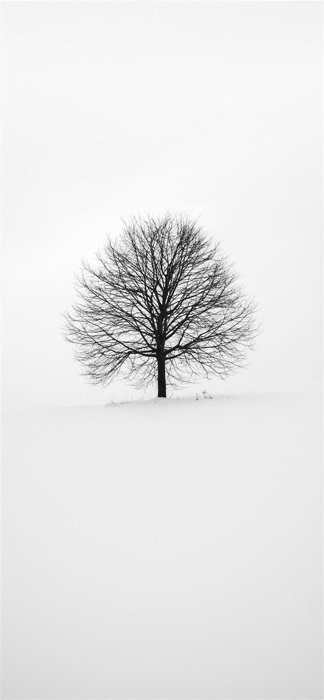 photography of tree iPhone 12 wallpaper
