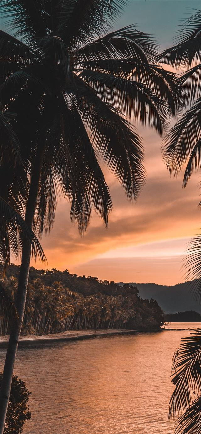 silhouette of palm tree during golden hour iPhone 12 wallpaper