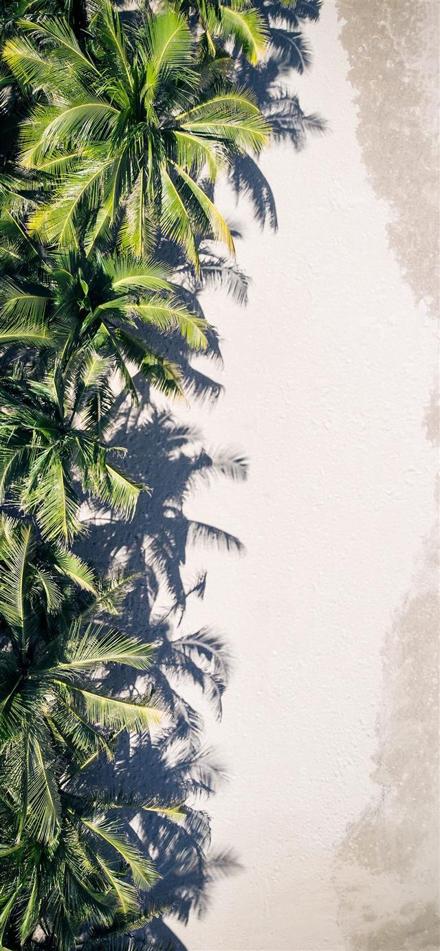 coconut palm trees iPhone 12 wallpaper