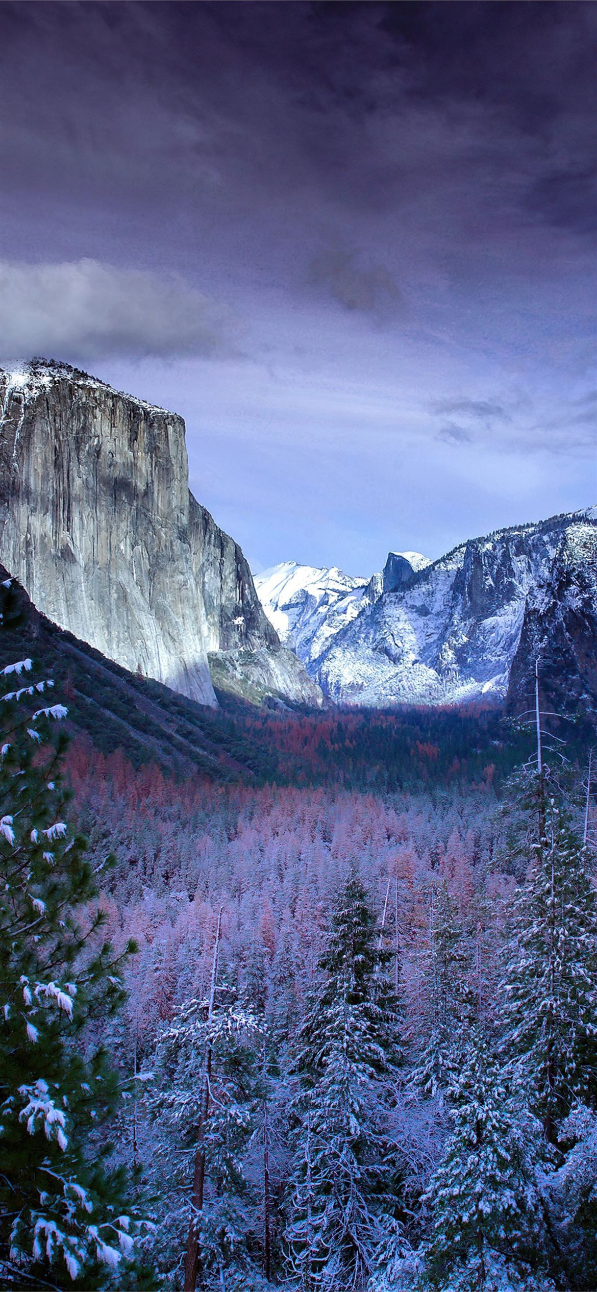 snow forests yosemite scenery 4k iPhone 12 Wallpapers Free ...