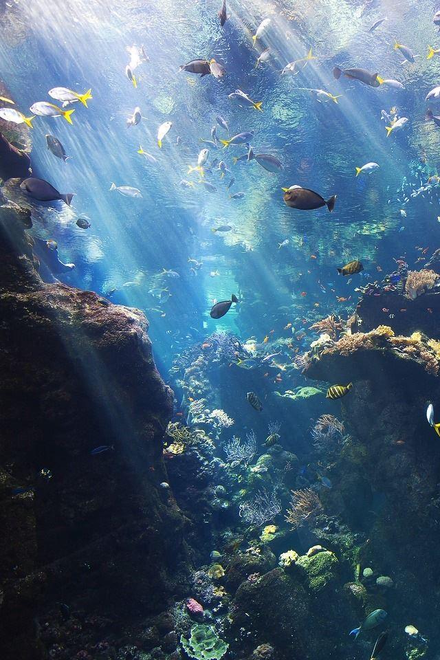 Underwater Iphone 4s Wallpapers Free Download