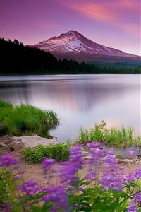 Mountain Lake And Flowers iPhone 4s wallpaper