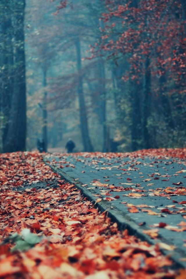 Road Deck Autumn Leaves iPhone 4s wallpaper