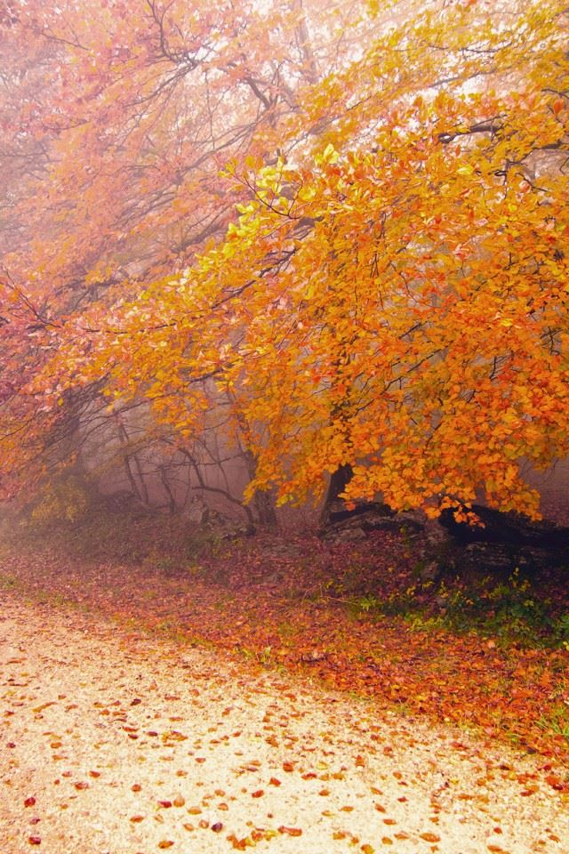 Foggy Autumn Morning iPhone 4s wallpaper
