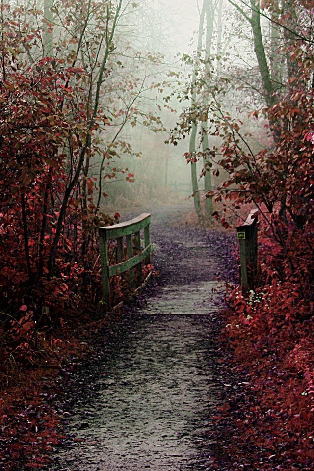 Autumn Mist Path iPhone 4s wallpaper