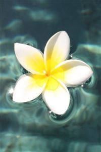 Plumeria Floating On Pool iPhone 4s wallpaper