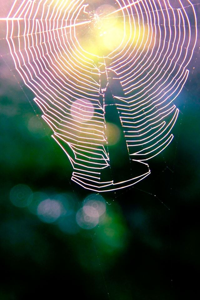 Spiderweb IPhone 4s Wallpaper
