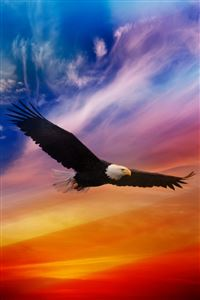 Flying Eagle iPhone 4s wallpaper