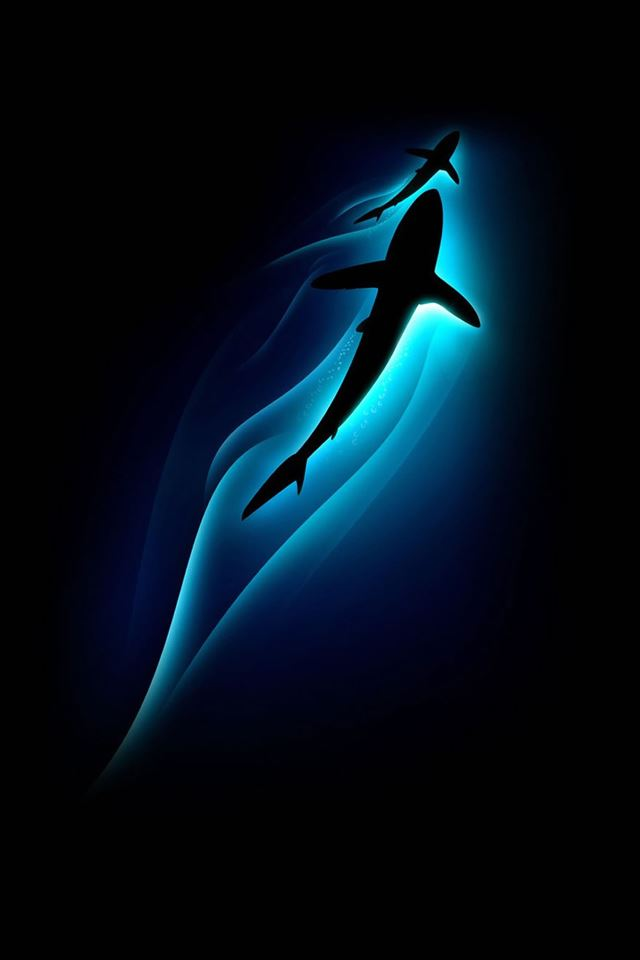 Sharks Ocean Depth Light Iphone 4s Wallpapers Free Download
