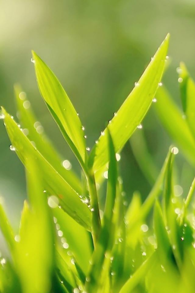 Morning Leafy Grass Macro iPhone 4s wallpaper