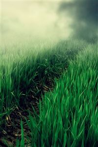 Country Foggy Twilight Grass Leafy Field Path iPhone 4s wallpaper